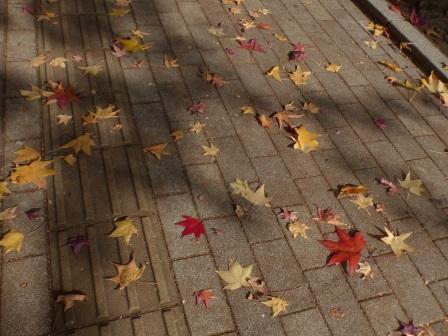 愛媛大学 城北キャンパス 落ち葉