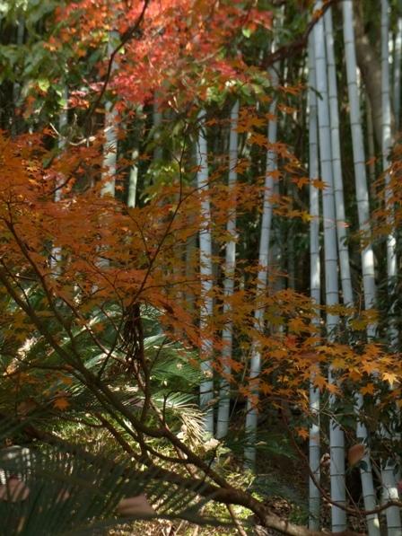 愛媛万葉苑 竹と紅葉