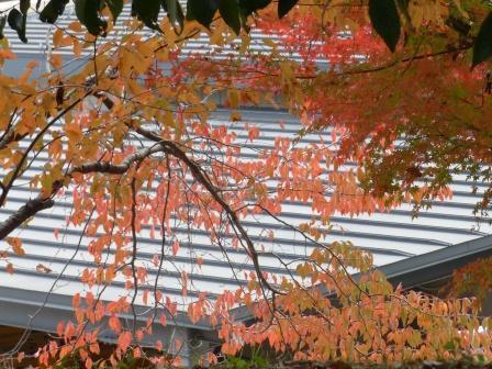 お城山 桜の紅葉 1
