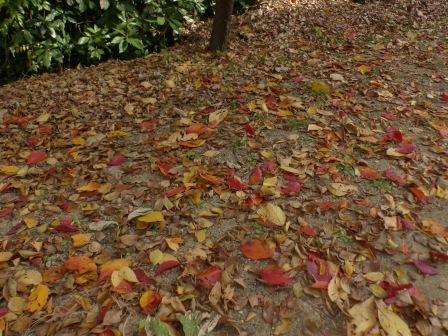 お城山 紅葉・黄葉の落ち葉