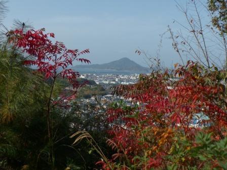 松山総合公園 ハゼノキの仲間の紅葉 3