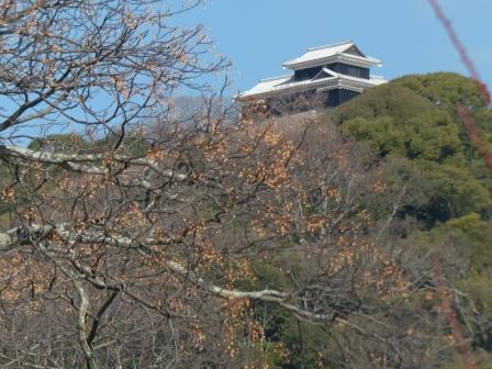 センダンの実と松山城の櫓