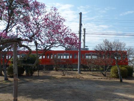 伊予鉄道・郊外電車 2 梅と