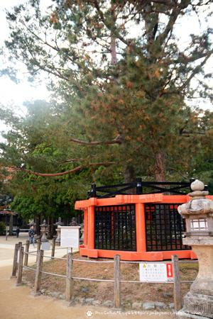 18101_koya12.jpg