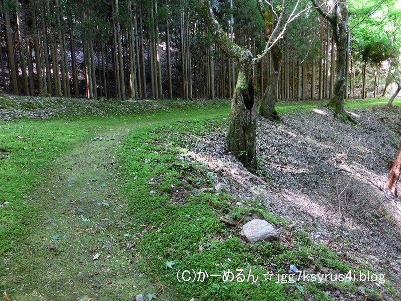 神護寺山林2