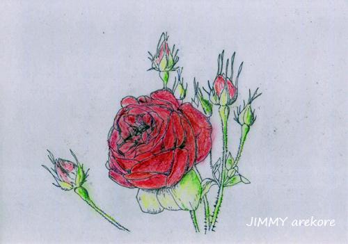 薔薇rose00325