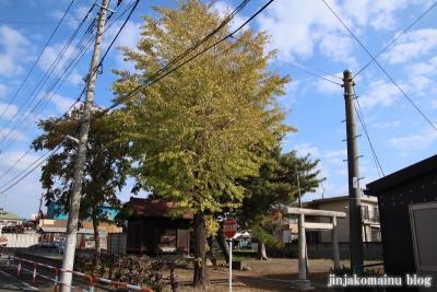 古千谷天祖神社(足立区古千谷本町)1