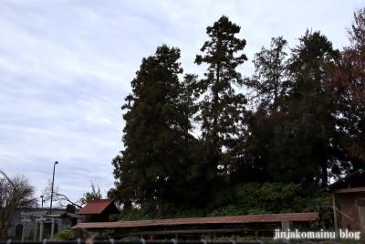 赤塚諏訪神社(板橋区大門)63
