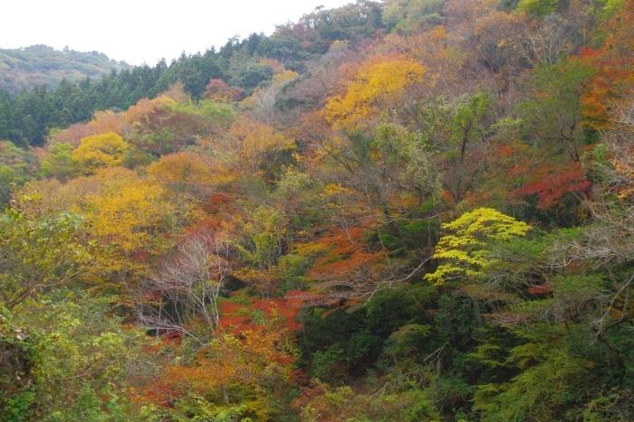 彩る木谷峡⑤