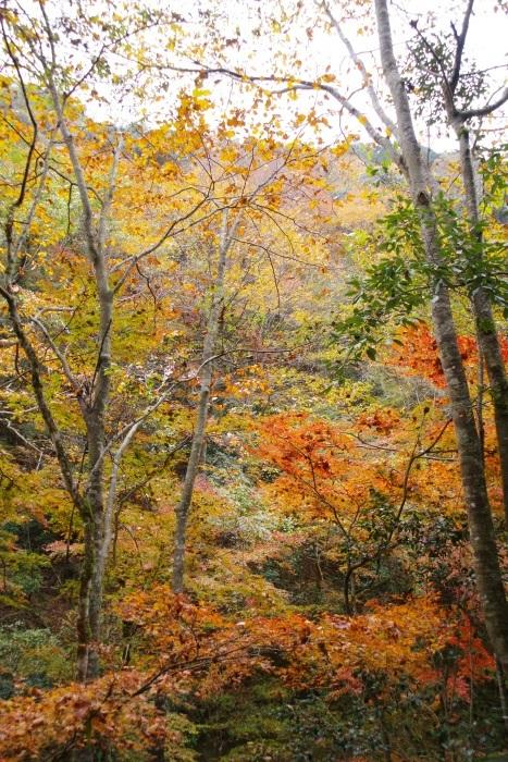 彩る木谷峡⑥