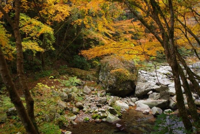 彩る木谷峡⑪