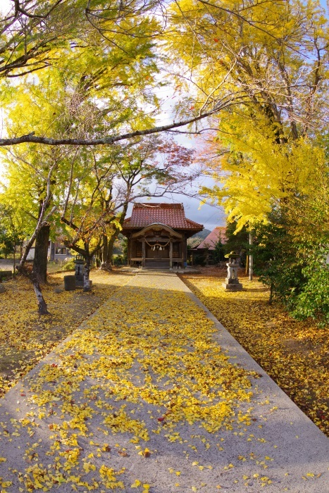 黄金色に輝く神社
