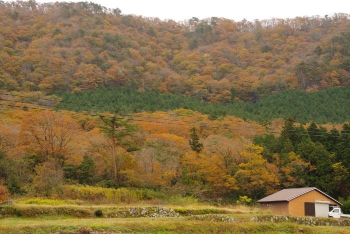 里山の晩秋