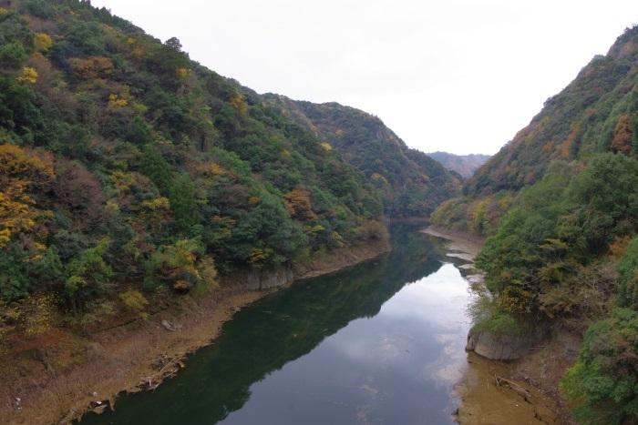 阿武川ダムの色づき