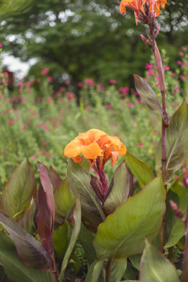 beautiful-flowers-growing-in-garden_23-2148029567.jpg
