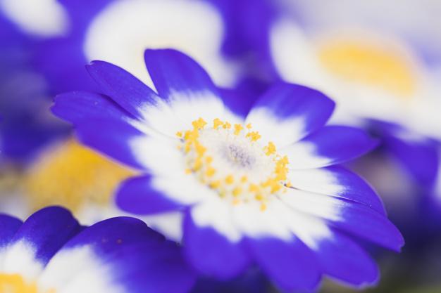 beautiful-fresh-azure-blossoms_23-2148060112.jpg