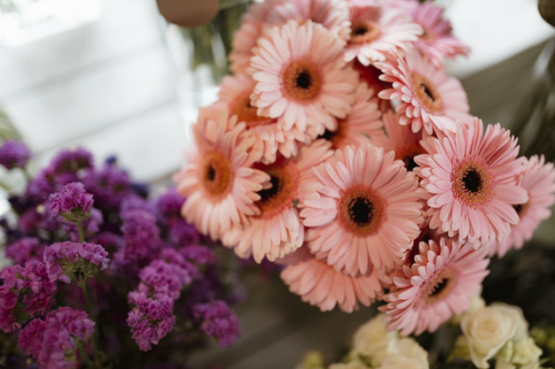 closeup-of-pink-gerber-daisy-bouquet-and-purple-statice_53876-63469.jpg