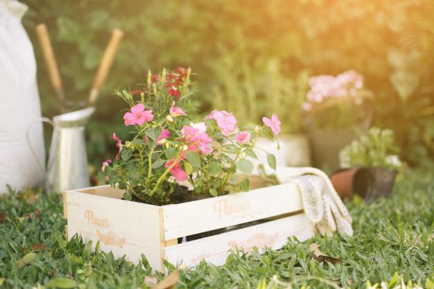 flowers-in-wooden-box-on-meadow_23-2148028941.jpg