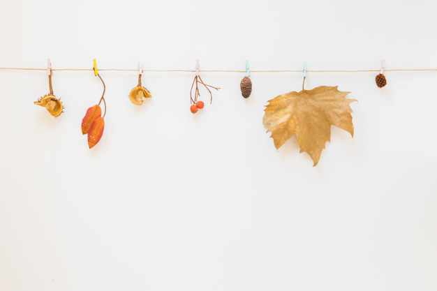 foliage-hitched-on-string_23-2147951021.jpg