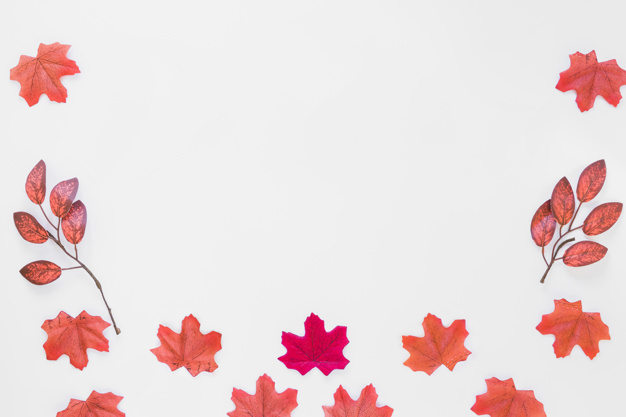 foliage-on-white-board_23-2147951022.jpg