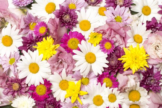 heap-of-wonderful-bright-flowers_23-2148025934.jpg