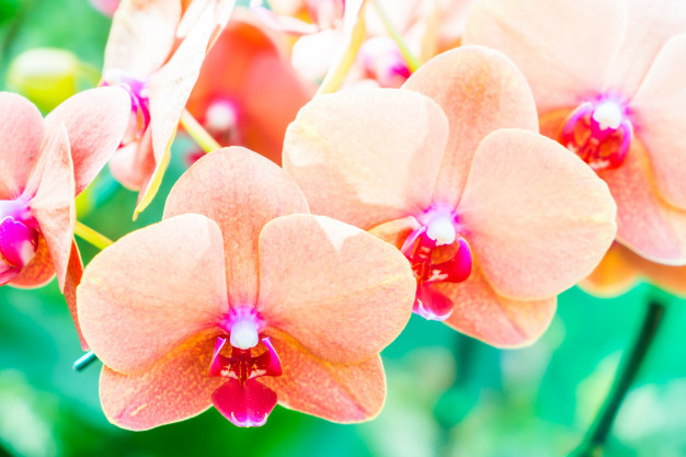 orchid-flower_74190-417.jpg