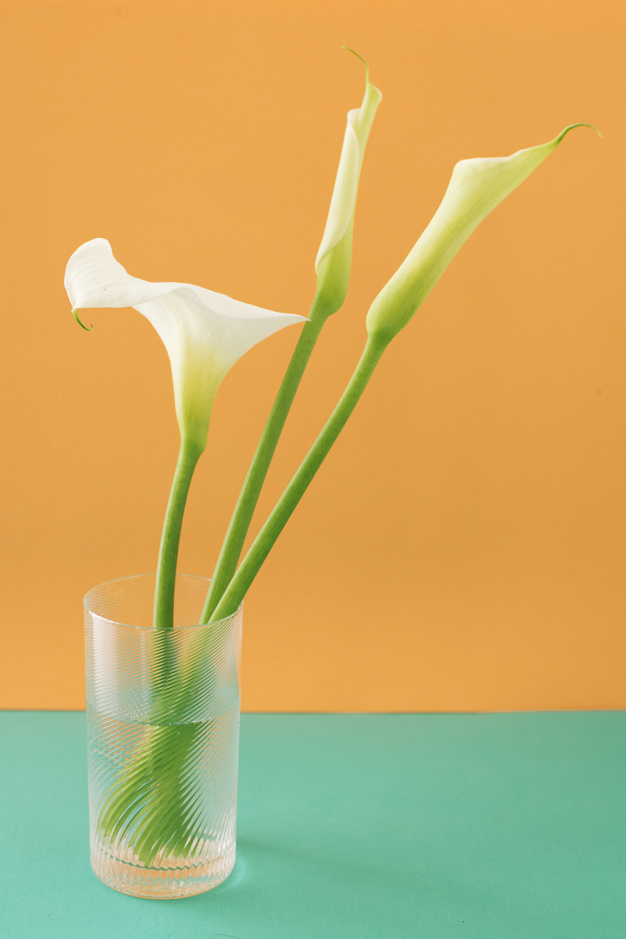 set-of-white-flowers-in-glass-with-water_23-2148029349.jpg