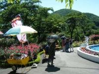 2018-06-09花巻薔薇園242