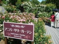2018-06-09花巻薔薇園241
