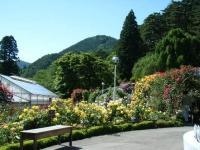 2018-06-09花巻薔薇園248