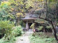2018-11-05中尊寺菊祭り014