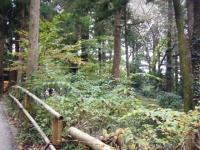 2018-11-05中尊寺菊祭り018