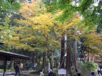 2018-11-05中尊寺菊祭り021