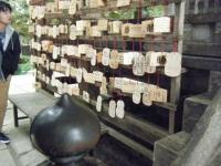 2018-11-05中尊寺菊祭り035