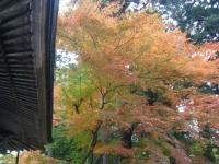 2018-11-05中尊寺菊祭り042
