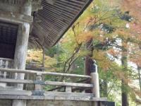2018-11-05中尊寺菊祭り041