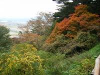 2018-11-05中尊寺菊祭り052