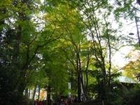 2018-11-05中尊寺菊祭り060