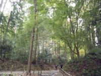 2018-11-05中尊寺菊祭り059