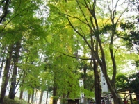 2018-11-05中尊寺菊祭り061