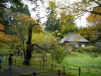 2018-11-05中尊寺菊祭り070