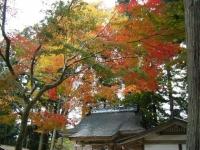 2018-11-05中尊寺菊祭り075