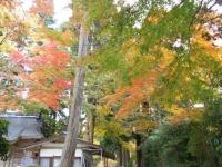 2018-11-05中尊寺菊祭り073