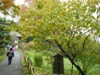 2018-11-05中尊寺菊祭り072