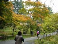 2018-11-05中尊寺菊祭り071