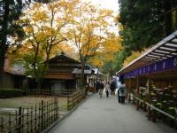 2018-11-05中尊寺菊祭り079