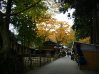2018-11-05中尊寺菊祭り078