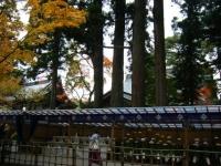 2018-11-05中尊寺菊祭り086