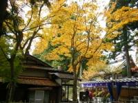 2018-11-05中尊寺菊祭り085