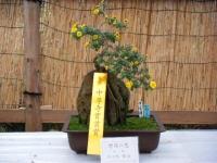2018-11-05中尊寺菊祭り091